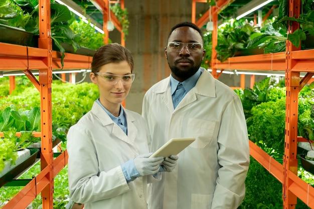 ほうれん草とレタスの緑の苗が付いている棚の間の通路に立っている白いコートと保護眼鏡の2人の若い研究者