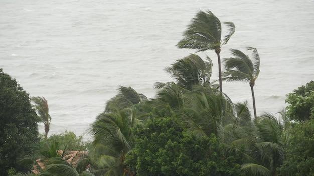 바다 해안의 태풍. 자연 재해. 강한 사이클론 바람과 야자수. 열대 폭풍우 날씨