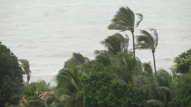 Typhoon by ocean shore. natural disaster. strong cyclone wind and palm trees. tropical storm weather