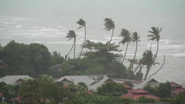 台風、海浜。自然災害のハリケーン。強いサイクロンの風と手のひら。熱帯低気圧。