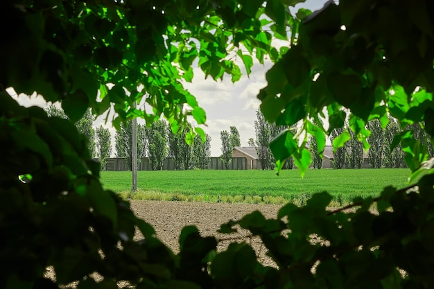 シーンのライムの葉のフレームでイタリアの田舎の典型的な田舎。