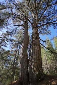 칼라브리아, 이탈리아의 실라 국립 공원에서 숲과 자연의 전형적인 풍경