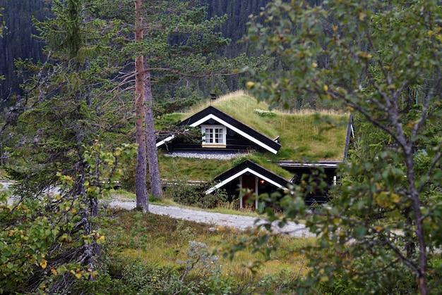 Типичный норвежский сельский коттедж с захватывающим дух пейзажем и красивой зеленью в норвегии