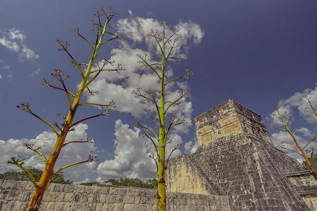 この地域の典型的な植物は、メキシコのチチェンイツァの考古学複合施設にあるジャガー神殿の近くの空にそびえ立っています。
