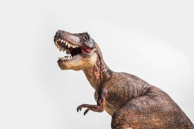 Tyrannosaurus on white background