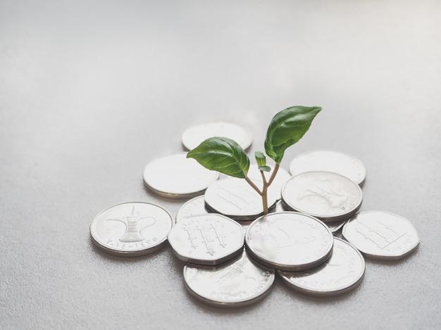 Uaeコイン。コインと緑の植物。