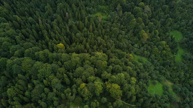 Ukrainian carpathian mountain forest from above aerial view