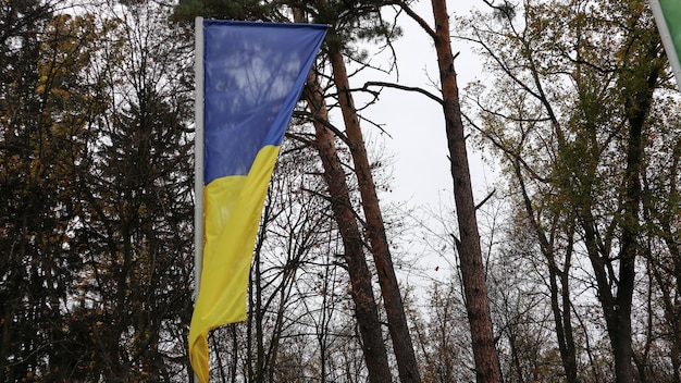 森林公園のマストに手を振っているウクライナの旗。風が吹いて旗が空を飛ぶ。背景には美しい背の高い木々。