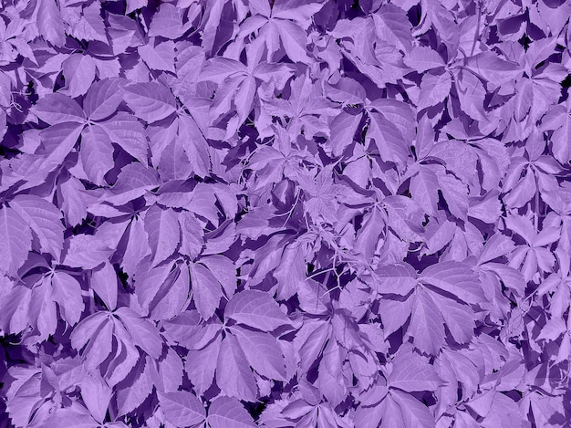 Ultra violet background made of leaves