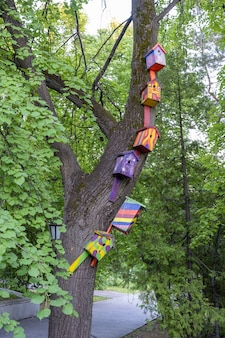 Ульяновск, россия - 25 июля 2021 года: забавные раскрашенные скворечники на дереве. деревянный скворечник ручной работы.