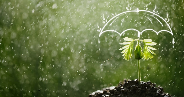 우산은 비로부터 묘목을 보호합니다. 어린이 및 신생 기업을 위한 보험 개념