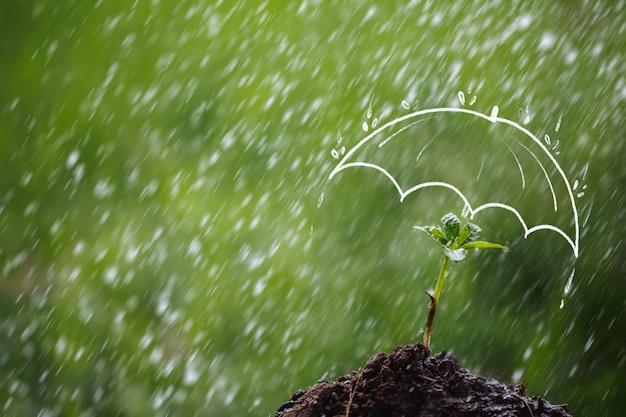 Зонтик защищает саженец от дождя. концепции страхования детей и начинающих предпринимателей
