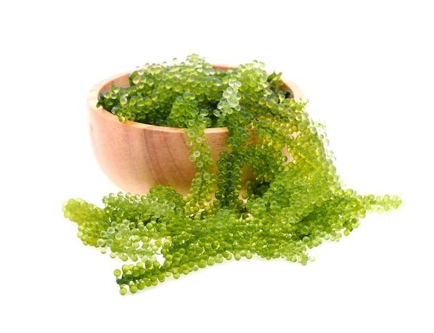 Umi-budou, 포도 해초 또는 흰색 배경에 고립 된 녹색 캐 비어