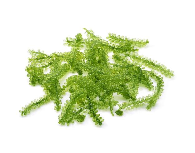 Umi-budou, 포도 해초 또는 녹색 캐비어 절연