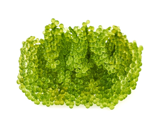 Umibudou, 포도 해초 또는 녹색 캐비어 흰색 절연
