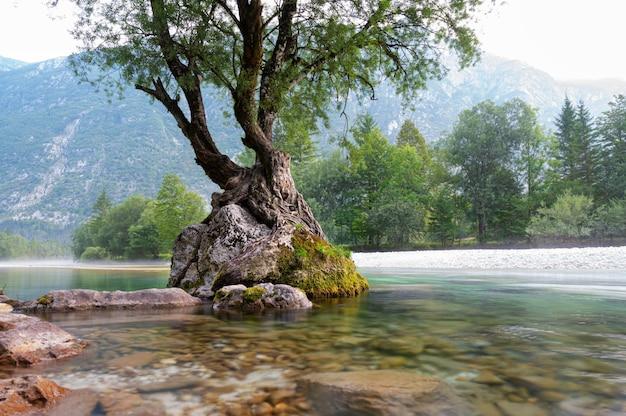 信じられないほどの自然の力-スロベニアの美しいソカ川の真ん中にある岩の上に生えている木。