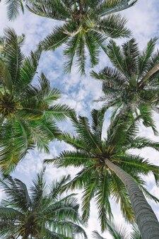Под пальмовыми листьями видны облака в небе. пальмовые листья вид снизу.