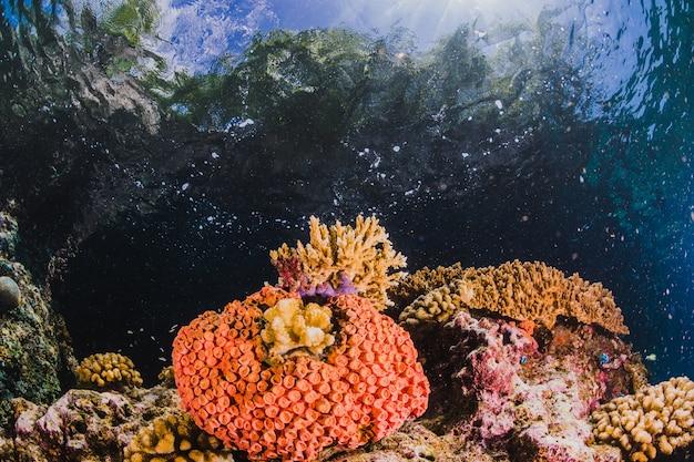 Под водой морской пейзаж с солнечным светом