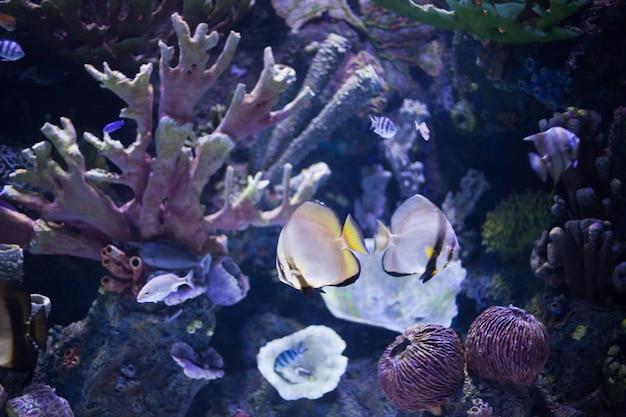 エキゾチックな魚が生息する海底世界のサンゴ礁