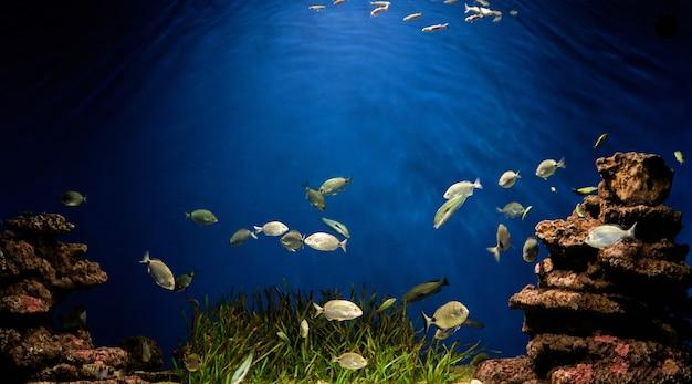 Подводный аквариум с рыбками и зелеными растениями