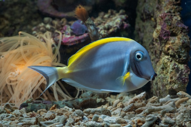 魚や珊瑚礁の水中の美しさ