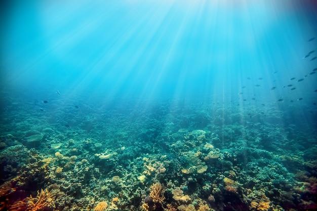 紅海の水中サンゴ礁