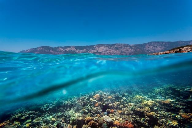 홍해의 수중 산호초