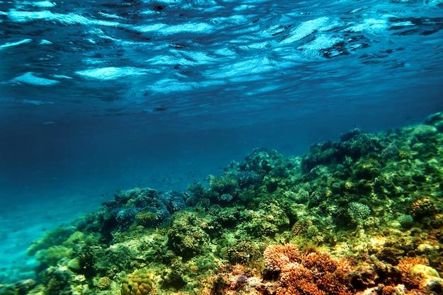 Подводный коралловый риф на красном море