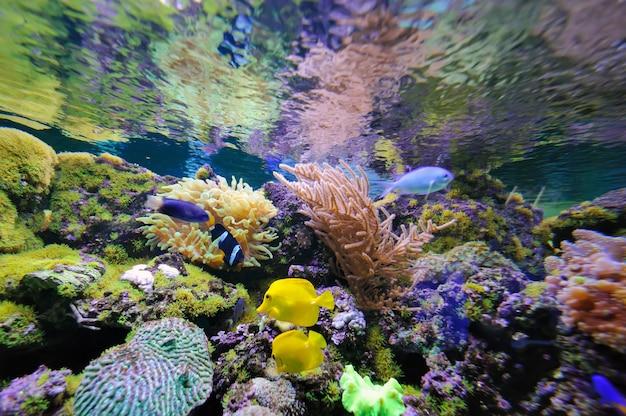 Подводные кораллы и рыбы