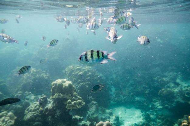 Underwater fish crowd around reef