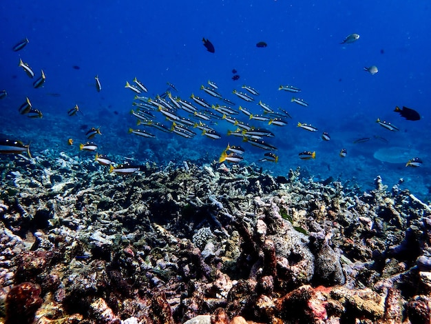 Underwater landscape with sea life.