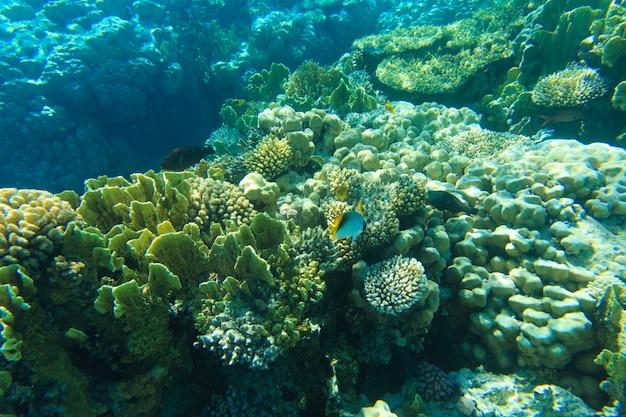 Underwater life on rocks
