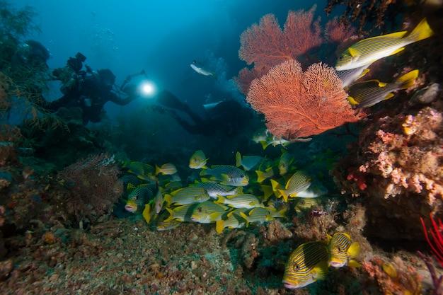 Underwater macro photography of marine animals