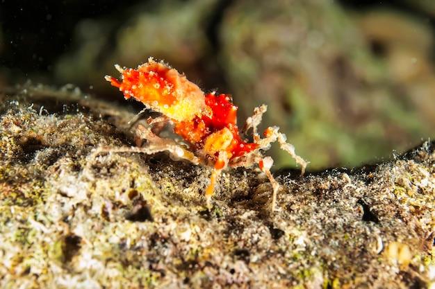Подводная макросъемка морских животных. растительность, существа под водой. морская жизнь под водой в океане. наблюдение за животным миром. подводное плавание с аквалангом в красном море, побережье африки
