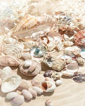 Underwater photo of seashells lying on sea bottom