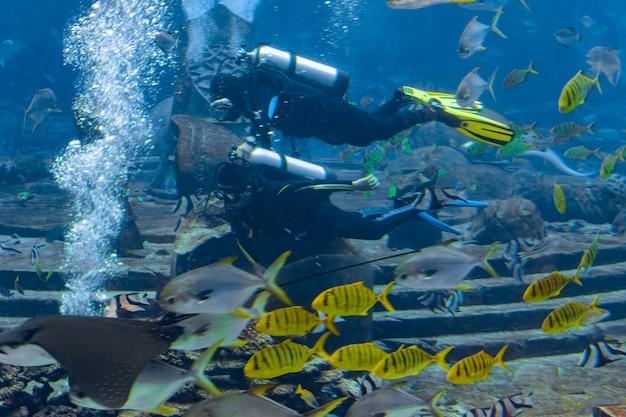 Подводные фотографы на погружениях с аквалангом. дайверы с камерой в окружении большого количества рыбок в огромном аквариуме. атлантида, санья, хайнань, китай.