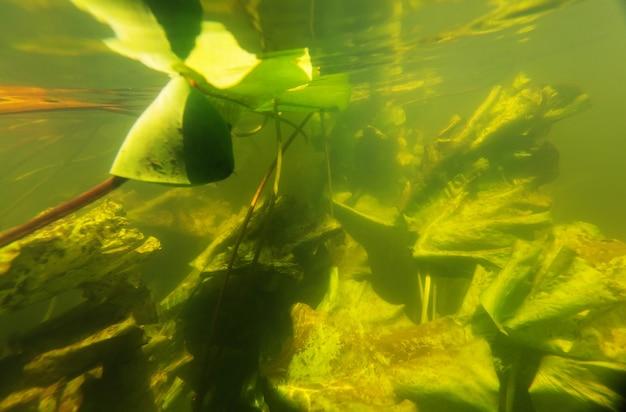夏の川の水中シーン