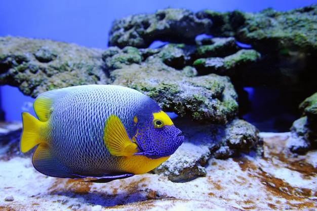 Подводная сцена, показывающая, как плавают разные разноцветные рыбы