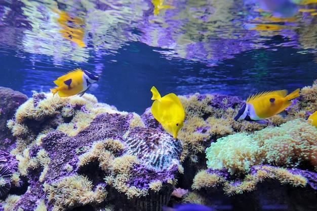 さまざまな色とりどりの魚が泳いでいる様子を示す水中シーン