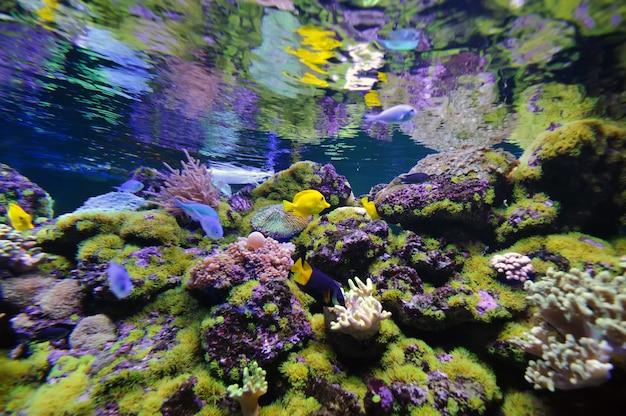 Подводная сцена