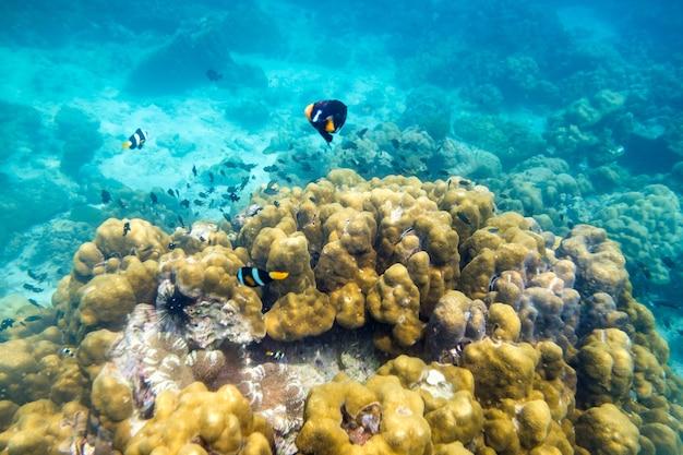 唇、アンダマンでカラフルな石の周りの水中海の魚
