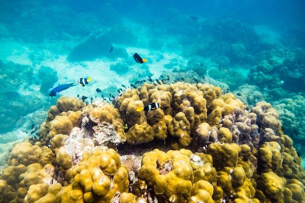 Underwater sea world fish swim around rock stone