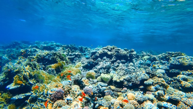 Underwater shot of a coral reef at the bottom of the sea.