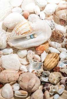 大きな貝殻に横たわる色とりどりの真珠の水中ショット