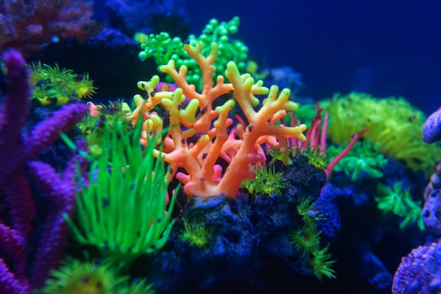 Underwater world fish aquarium in the neon light