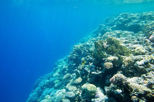 水中世界のパノラマ。水中のサンゴ礁の海の光