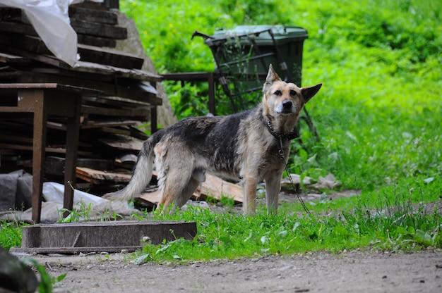Несчастная собака на цепи возле кучи мусора на улице