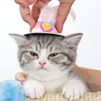 남자의 손에 그의 머리에 고양이 장난감 모자에 불만.