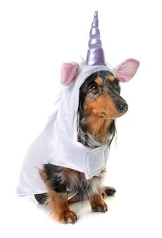 Unicorn dachshund