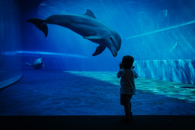 Unique communication moment between dolphin and little child
